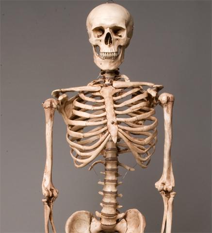 item specifics - Halloween Skeletons