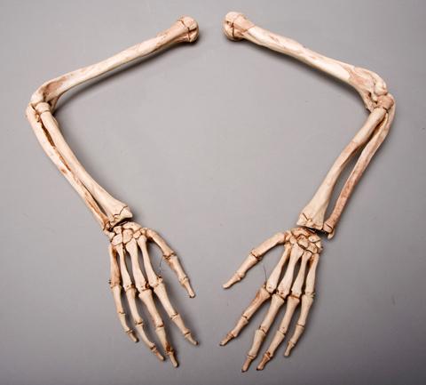 halloween horror aged skeleton arms life-size human, left & right, Skeleton