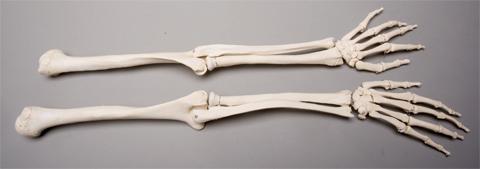 halloween horror skeleton arms life-size human, left & right, new, Skeleton